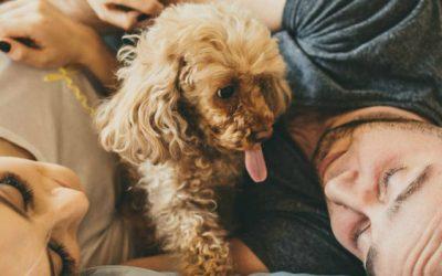 Gastos com animais de estimação: saiba mais aqui