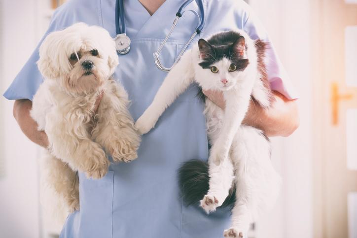 Entenda como funciona o plano de saúde para animais
