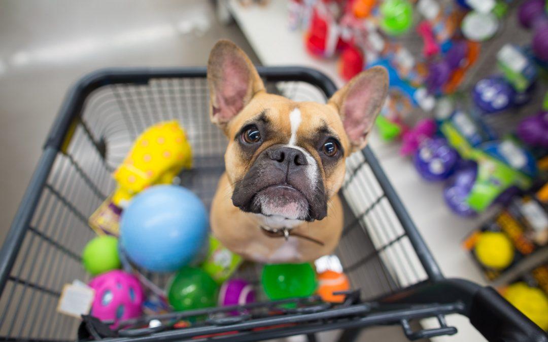 Como funciona o seguro para pet shop?
