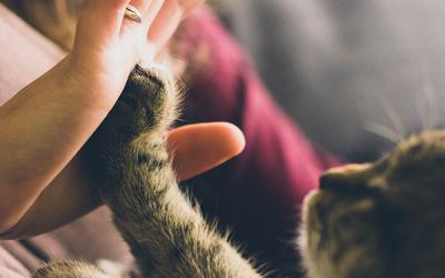 Seguro Pet: 5 Razões para Contratar Um para o seu Animal de Estimação
